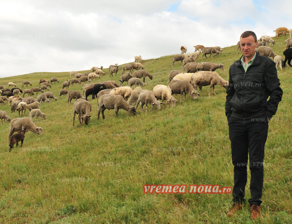 Poveste de succes cu oi, oameni muncitori si cumpãtati la Viisoara (foto)