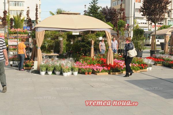 serbarea florilor orgacizare3515