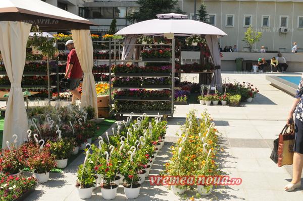 serbarea florilor3633