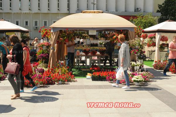 serbarea florilor3643