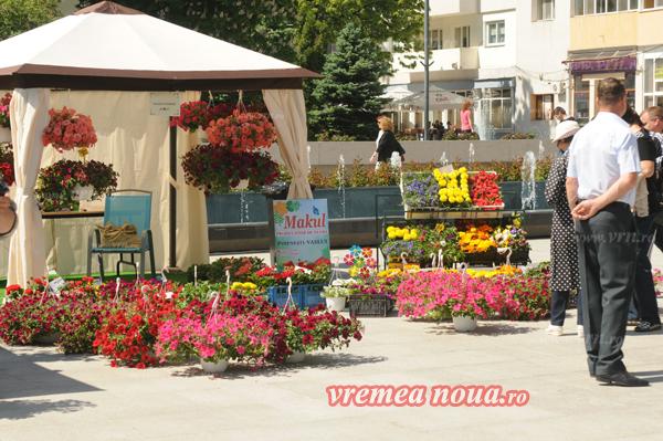 serbarea florilor3645