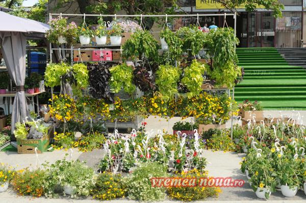 serbarea florilor3649