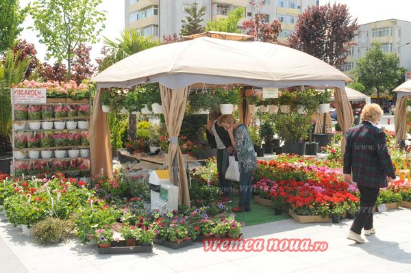 serbarea florilor3661