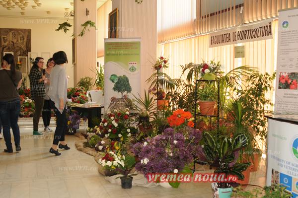 serbarea florilor3671