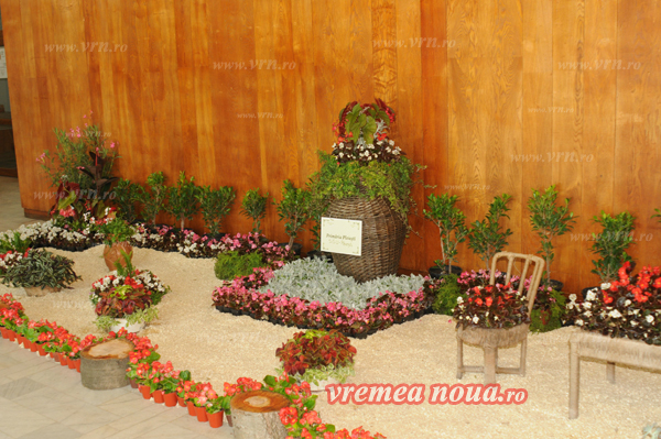 serbarea florilor3675