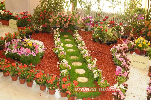 serbarea florilor3681