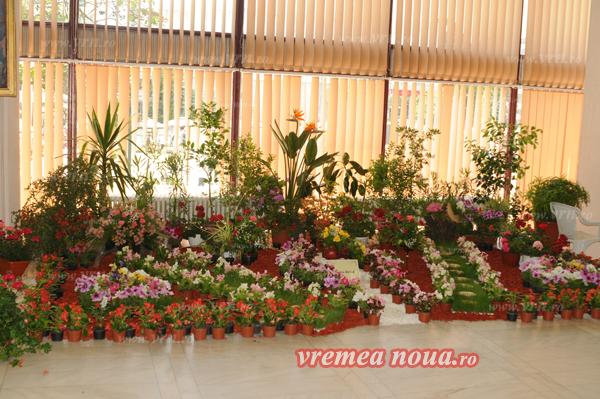 serbarea florilor3685