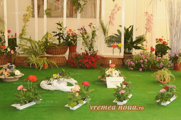 serbarea florilor3689