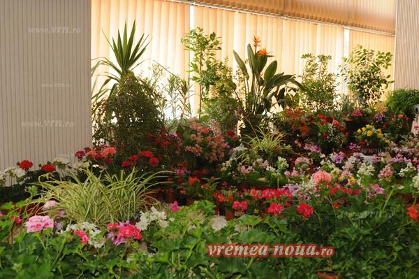 serbarea florilor3692
