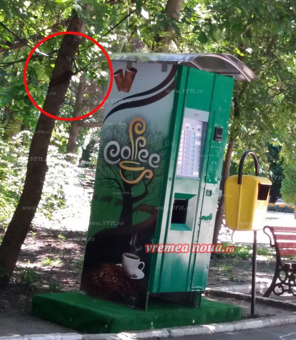 Copacii din Grãdina Publicã Bârlad – pe post de stâlpi de electricitate!