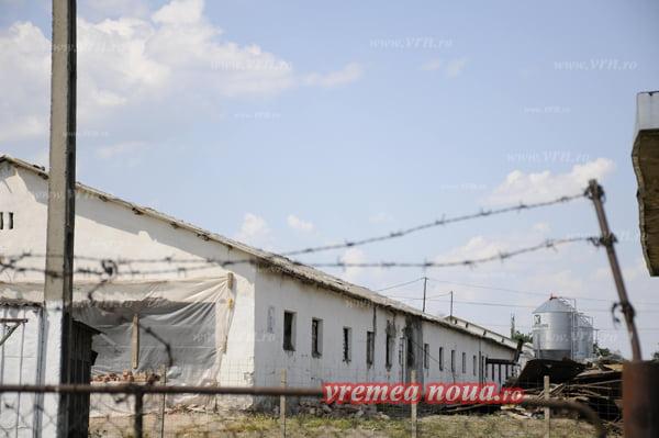 Scandal în jurul Avicom, zeci de vasluieni reclamã mirosurile pestilentiale de la fabrica lui Bogos