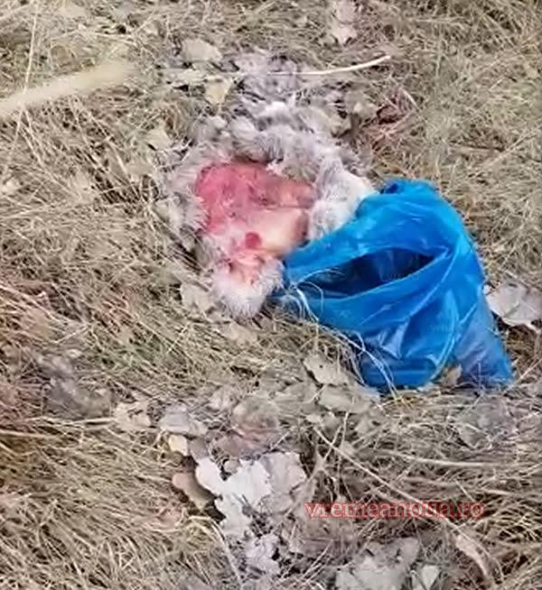 FAZA ZILEI: Resturi de porc mistret si cãprioarã aruncate pe marginea drumului! | VIDEO