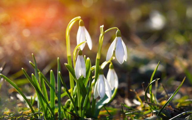 Prognoza meteo: Ce vreme aduce primăvara. Cât de cald se face şi unde lovesc ninsorile, cât ţine vremea bună