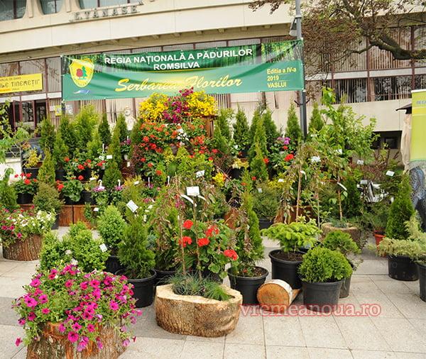 Serbarea Florilor 2019 la Vaslui: Directia Silvicã, cel mai înfloritor stand din Piata Civicã!