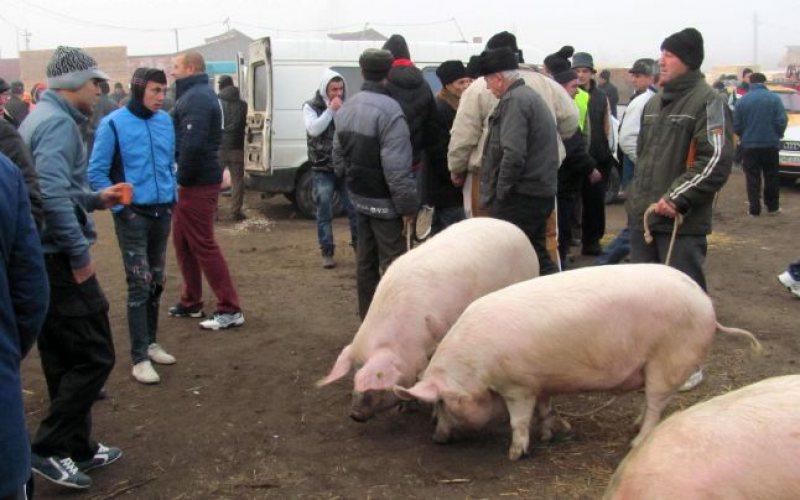 Restrictii totale la vânzarea de porci, în târgurile duminicale vasluiene