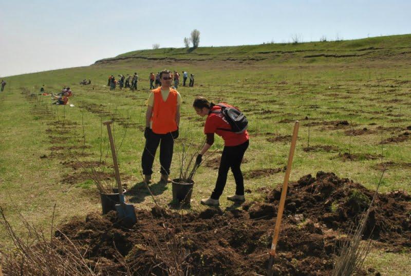 Douã miliarde de puieti forestieri plantati de Romsilva, din 1991 pânã în prezent, milioane de puieti în judetul Vaslui