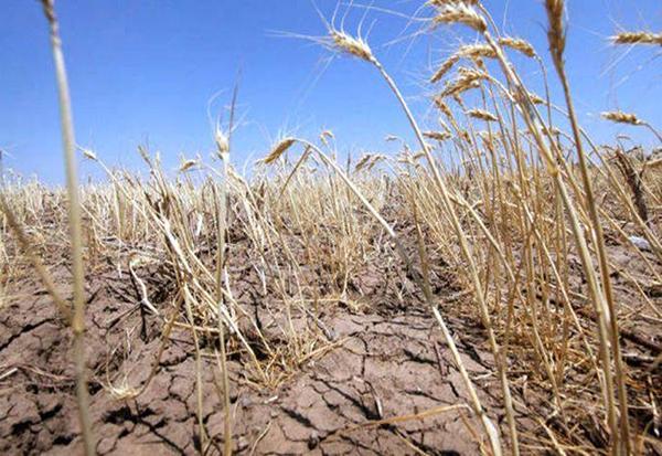 Iatã ce despãgubiri vor primi fermierii afectati de secetã